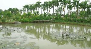 Yen-duc-village