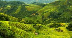 Hoang-Su-Phi-terraced-fields