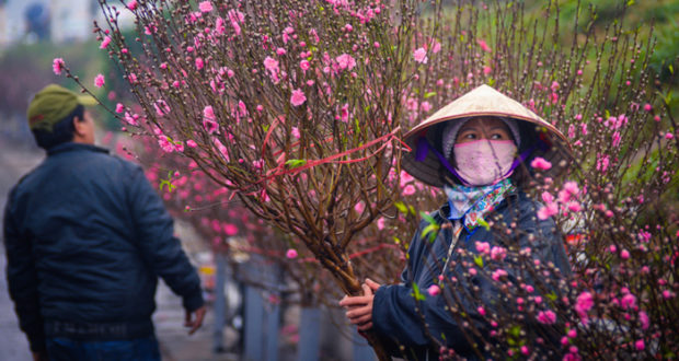 Peach flowers on Hanoi Streets before Lunar New Year