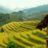 Far North Vietnam Photography Tour