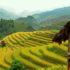 Far North Vietnam Photography Tour