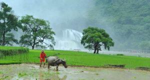 Ban Gioc Waterfall in Cao Bang Vietnam
